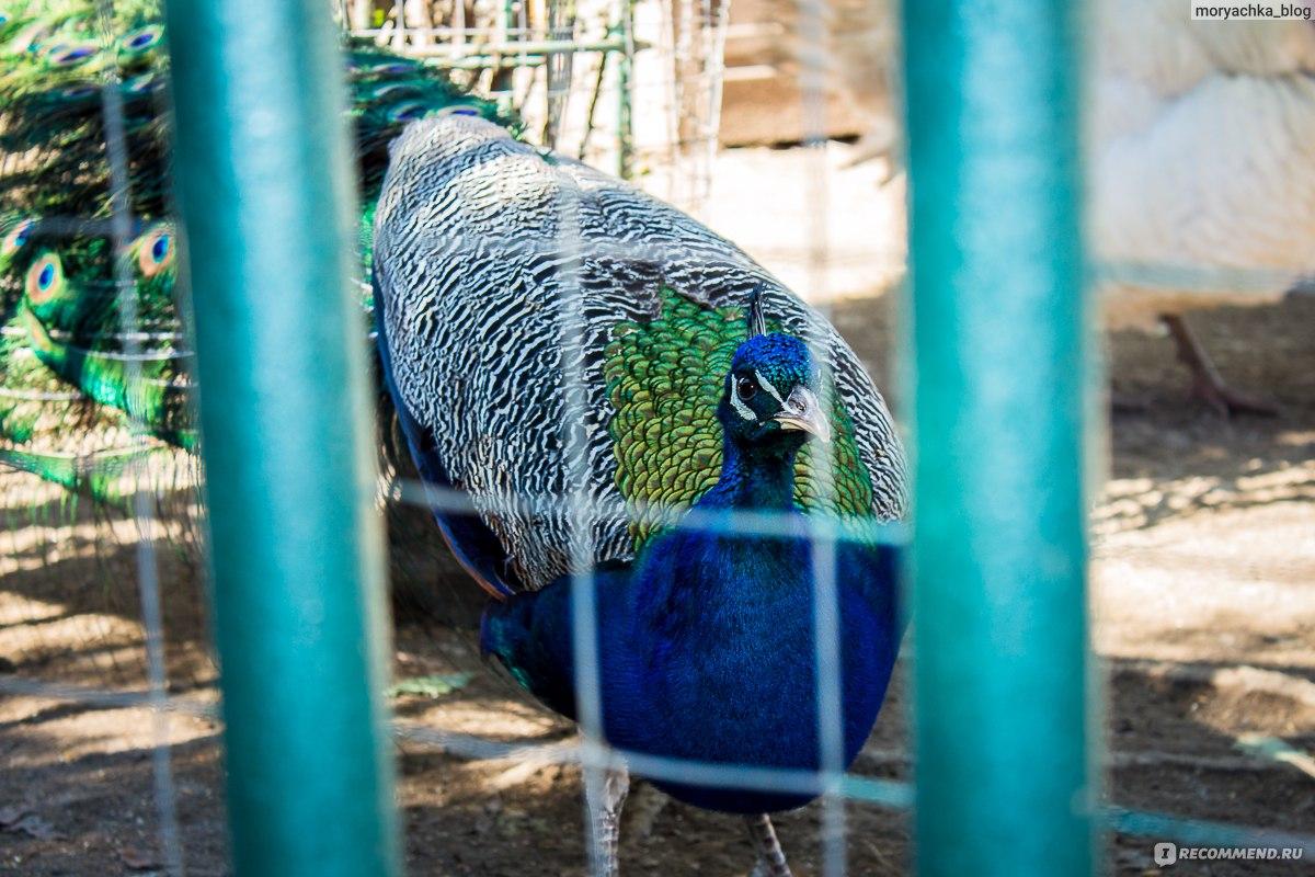 Зоопрак в санатории октябрьский и музей ретроавтомобилей в Дагомысе