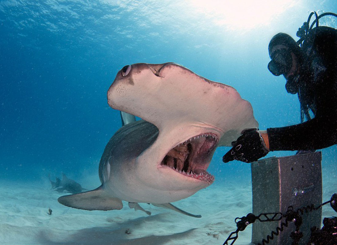 Экскурсия в дельфинарий и океанариум